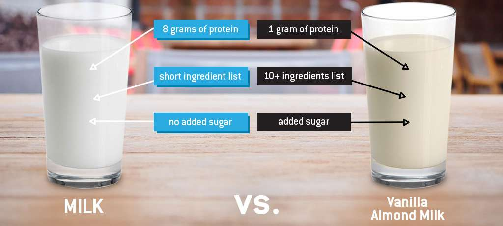 o	Comparing the protein, ingredients, and sugar in real milk vs non-dairy milk